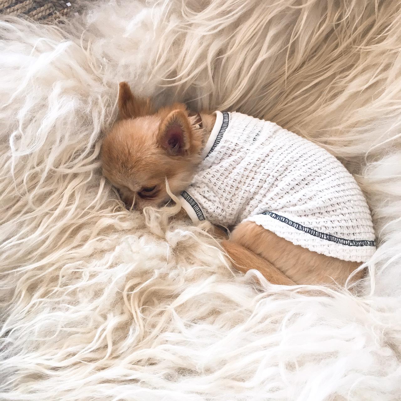 Dog Thermal